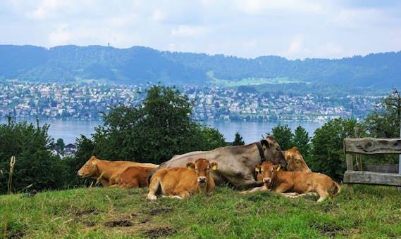 Zurich region